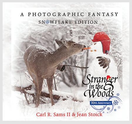 stranger in the woods book the awardwinning childrens