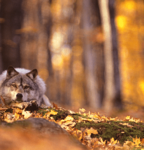 Autumn Retreat