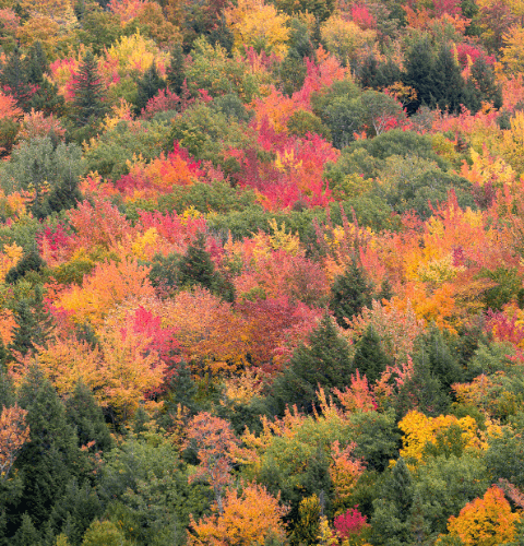 Big Bay Fall Colors