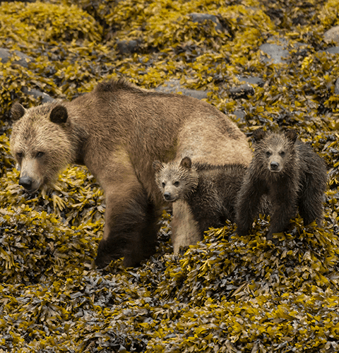 By The Shore Bears