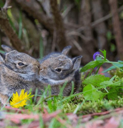 Cute Buns