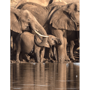 Elephants At Water Hole2