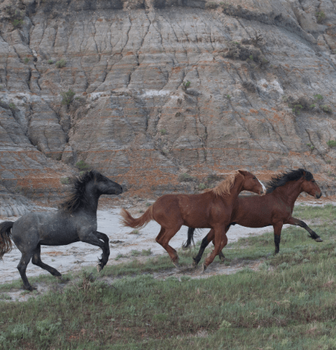 Horses In Painted Canyon