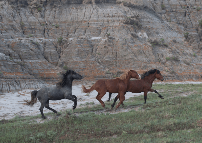 Horses Of Painted Canyon
