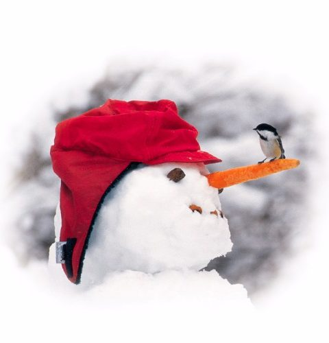 Chickadee And Snowman